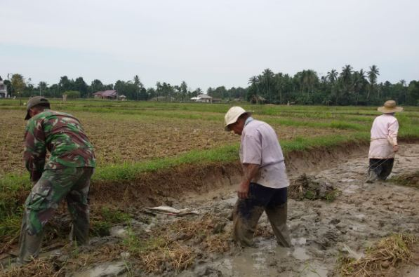 Babinsa Koramil 17/Idt Dampingi Petani Buat Galengan/theeast.co.id