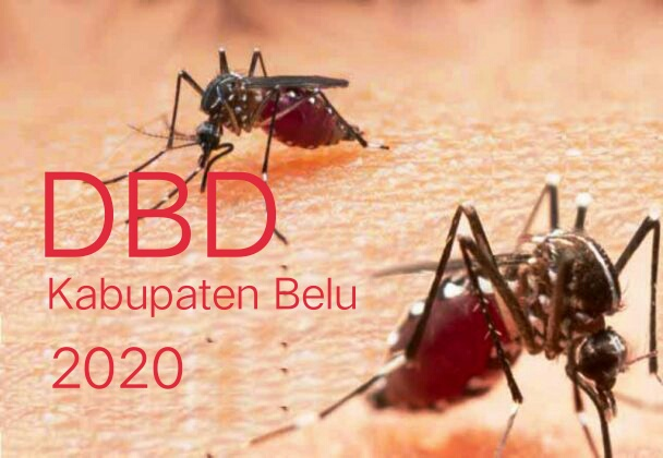 Kasus DBD Terus Meningkat di Kabupaten Belu /theeast.co.id