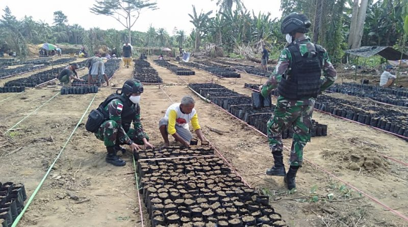 Membantu Membangun Ekonomi Warga, Satgas Raider 300 Bantu Pembibitan Sawit/theeast.co.id