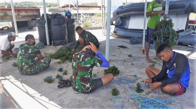 Dispotmar Lantamal VII Budi Dayakan Rumput Laut Sebagai Alternatif Pengganti Beras/theeast.co.id