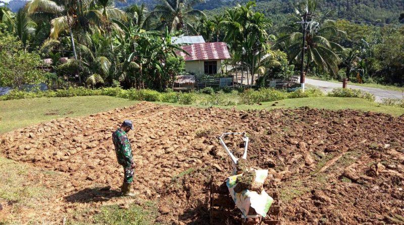 Koramil 01/Sungai Mas Olah Lahan Tidur Menjadi Budidaya Tanaman Pangan Lokal Cegah Krisis Pangan Akibat Covid-19/theeast.co,.id