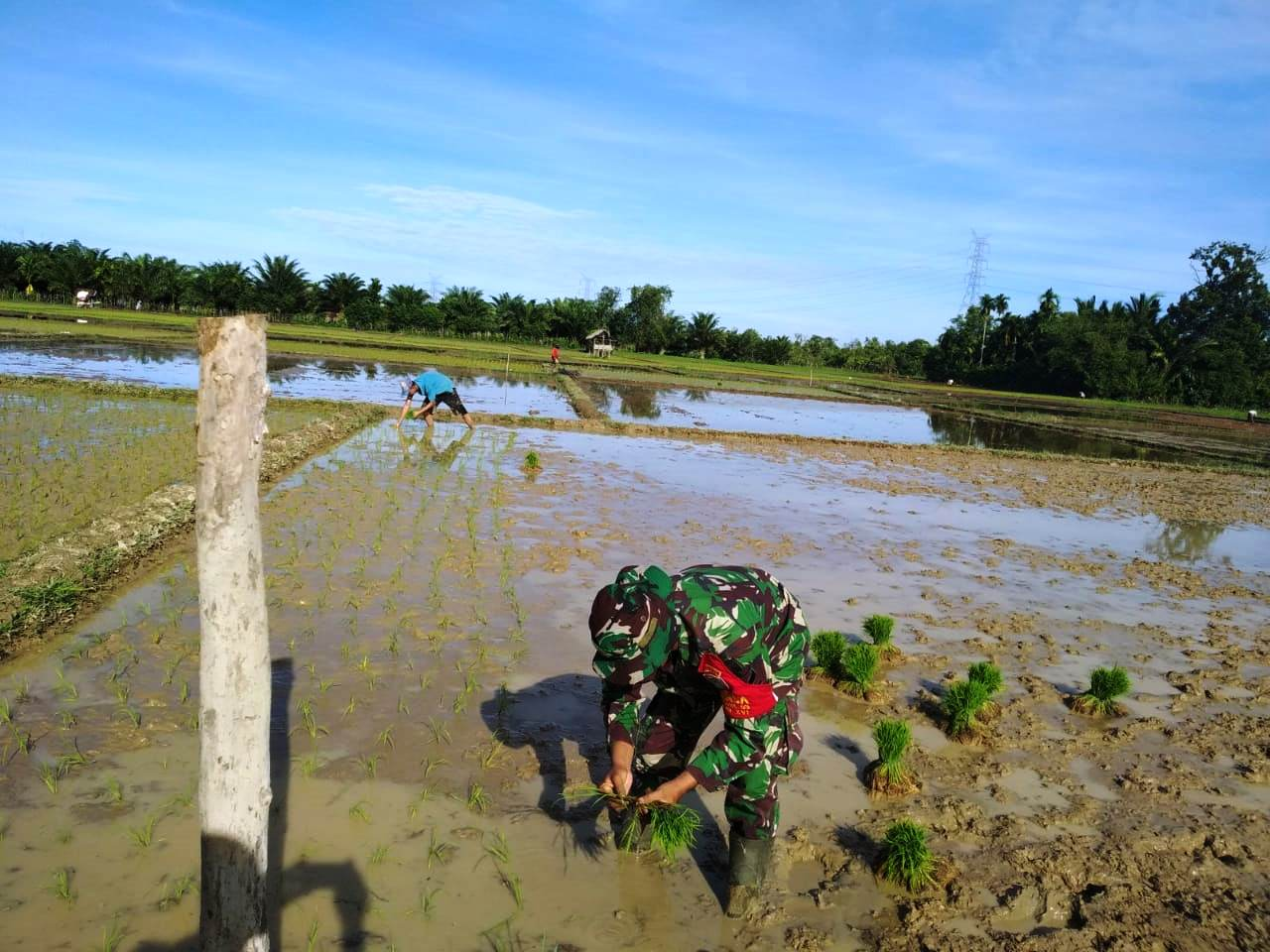 Meski Dalam Kondisi Puasa, Serda Taufiq Nasution Tetap Membantu Warganya Tanam Padi/theeast.co.id